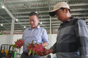 Nông dân Châu Thành thu hàng trăm triệu đồng/năm nhờ cây thanh long