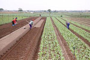 Hợp tác xã nông nghiệp khôi phục sản xuất