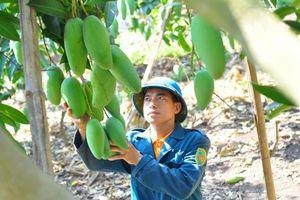 Đăk Nông chuyển hướng chuyên canh cây ăn quả tập trung