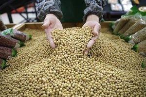 Trung Quốc dừng mua đậu tương, thịt lợn: Người Mỹ thêm buồn?