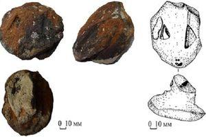 Đầu rắn nghìn năm tuổi hé lộ nhiều điều bất ngờ
