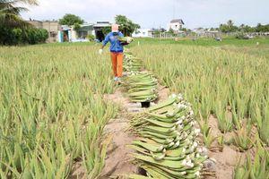 Ninh Thuận loay hoay với 'tiềm năng' xuất khẩu