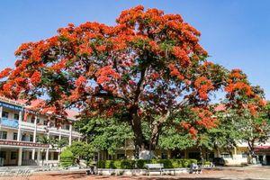 Cách nào quản lý cây xanh trong trường học?