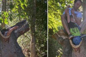 Dở khóc dở cười vì tai nạn hi hữu mắc kẹt trong thân cây cổ thụ