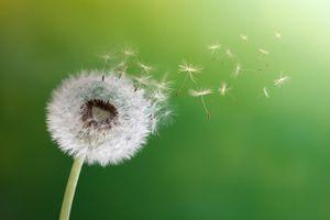 Điều ước từ tận đáy lòng cũng có thể tiết lộ phần nào con người của bạn