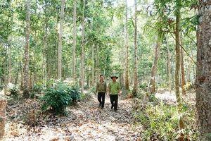 Nỗ lực tái sinh cho rừng phòng hộ Dầu Tiếng