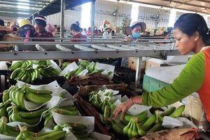 Doanh nghiệp Việt Nam tại Campuchia tạo nhiều việc làm cho người lao động