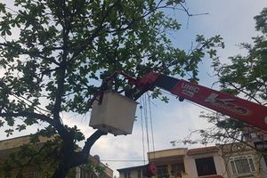 Hải Phòng: Các trường không được tự ý cắt, hạ cây