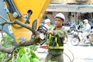 Công nhân đội nắng tỉa cây trước mùa mưa bão