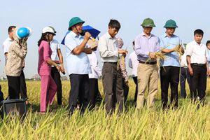 Tập huấn phương pháp canh tác lúa thân thiện với môi trường