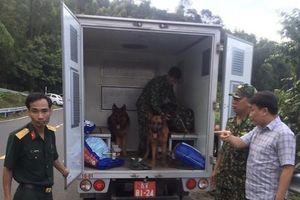 Lực lượng quân đội, công an cùng chó nghiệp vụ vây bắt kẻ vượt ngục ở đèo Hải Vân