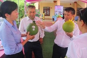 Hoài Ân-Bình Định: Đánh thức tiềm năng, thế mạnh của 'miền đất hứa' trong nông nghiệp