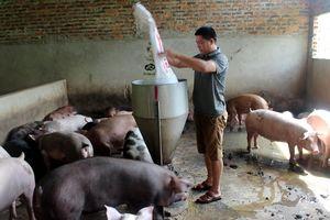 Người chăn nuôi Sơn La nỗ lực tái đàn sau dịch tả lợn châu Phi