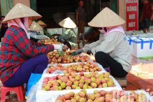 Vải thiều Bắc Giang giá 25 nghìn đồng/kg bán chạy, hàng chục nghìn tấn 'hết bay'