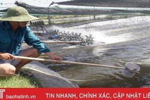 Nông dân Hà Tĩnh 'giải nhiệt' cho tôm nuôi mùa nắng nóng