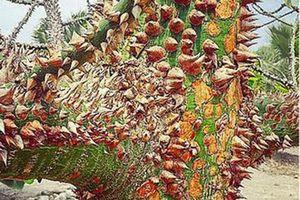 'Giật mình' trước 8 loài thực vật lạ lùng, mang 'siêu năng lực trên thế giới