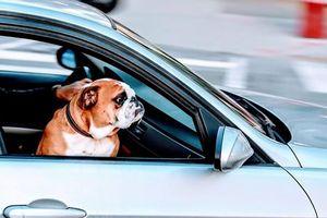 Hỏi xoáy đáp xoay: Vì sao một số người lại bị say xe còn người khác thì không?