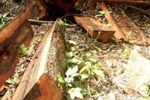 Xử lý nghiêm vụ phá rừng nghiêm trọng ở Trường Sơn