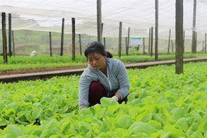 Hà Nội mở rộng diện tích rau màu vụ Mùa