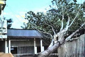 Cần Thơ: Mưa dông, lốc xoáy gây thiệt hại hơn 100 căn nhà