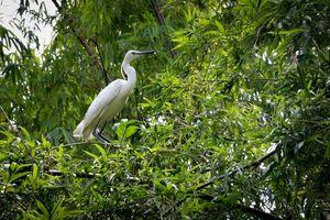 Bồi hoàn đa dạng sinh học: Cơ hội trả lại thiên nhiên những gì đã mất