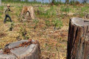 Buông lỏng quản lý, nông, lâm trường dễ thành các 'điểm nóng' đất đai