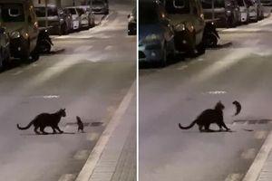 Chú chuột xuất chiêu 'như ninja' khi gặp mèo giữa đường