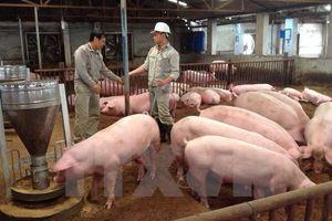 Nông dân không có phần trong lãi khủng của doanh nghiệp kinh doanh lợn