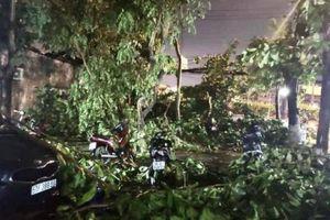 TP.HCM: Mưa lớn gió mạnh quật ngã cây xanh đè trúng ô tô, xe máy