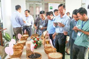 Tập trung sản xuất gạo ngon, chất lượng cao