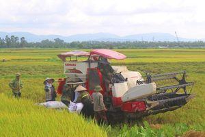 Vụ Đông Xuân: Đảm bảo năng suất, sản lượng
