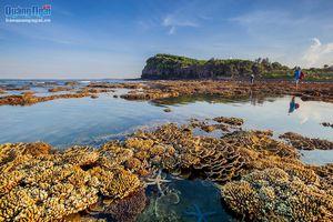 Mê mẩn với vẻ đẹp của rừng san hô lộ thiên ở Gành Yến