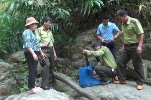 Yên Bái thả ba cá thể kỳ đà hoa về tự nhiên