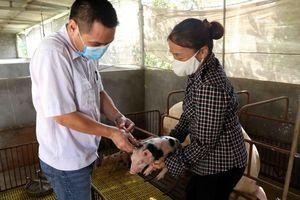 Đắk Lắk hỗ trợ nông dân và doanh nghiệp tái đàn lợn hiệu quả