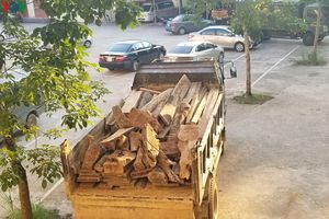 Bắc Kạn bắt giữ xe tải vận chuyển gỗ trái phép