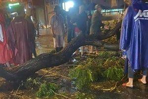 UBND quận 10 thông tin vụ cây xanh ngã đè chết người đi đường ở Sài Gòn