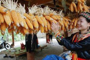 Nông nghiệp Yên Bái trên đường tăng tốc