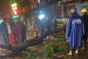 Vụ cây xanh tét nhánh đè chết người ở TP HCM: Chính quyền nói gì?