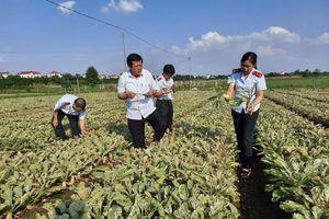 Hà Nội đi đầu trong việc hạn chế sử dụng thuốc bảo vệ thực vật