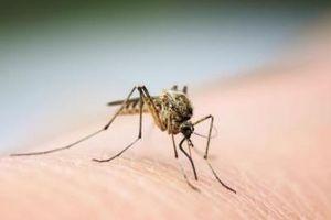 Bác sĩ cảnh báo người dân không tự điều trị sốt xuất huyết tại nhà