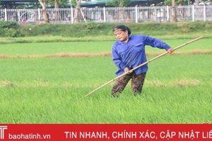 Thời tiết ủng hộ, nông dân Hà Tĩnh xuống đồng bón thúc lúa hè thu