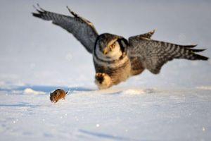 Ảnh đẹp: Ngựa vằn bên hồ, chim cú săn chuột trên cánh đồng tuyết