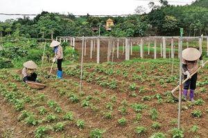 Thu nhập cao từ trang trại VAC