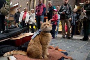 Chú mèo đường phố Bob qua đời ở tuổi 14