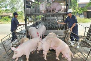 Giá lợn hơi hôm nay 17/6: Nguồn cung trên toàn cầu thiếu, giá trong nước khó giảm sâu