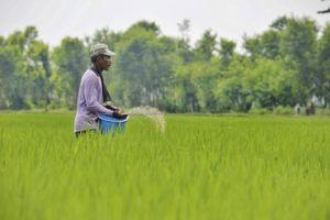 Indonesia cải tạo đất than bùn thành đất canh tác lúa