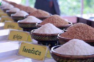 Xuất khẩu nông sản Campuchia tăng mạnh trong 5 tháng đầu năm 2020