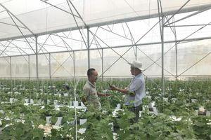 Làm nông nghiệp công nghệ cao: Hạnh phúc nhân đôi