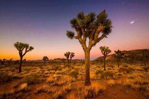 Chùm ảnh: Những sa mạc đẹp nhất trên Trái Đất