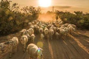Ninh Thuận: Sự khác lạ, trải nghiệm mới tại 5 điểm du lịch hấp dẫn